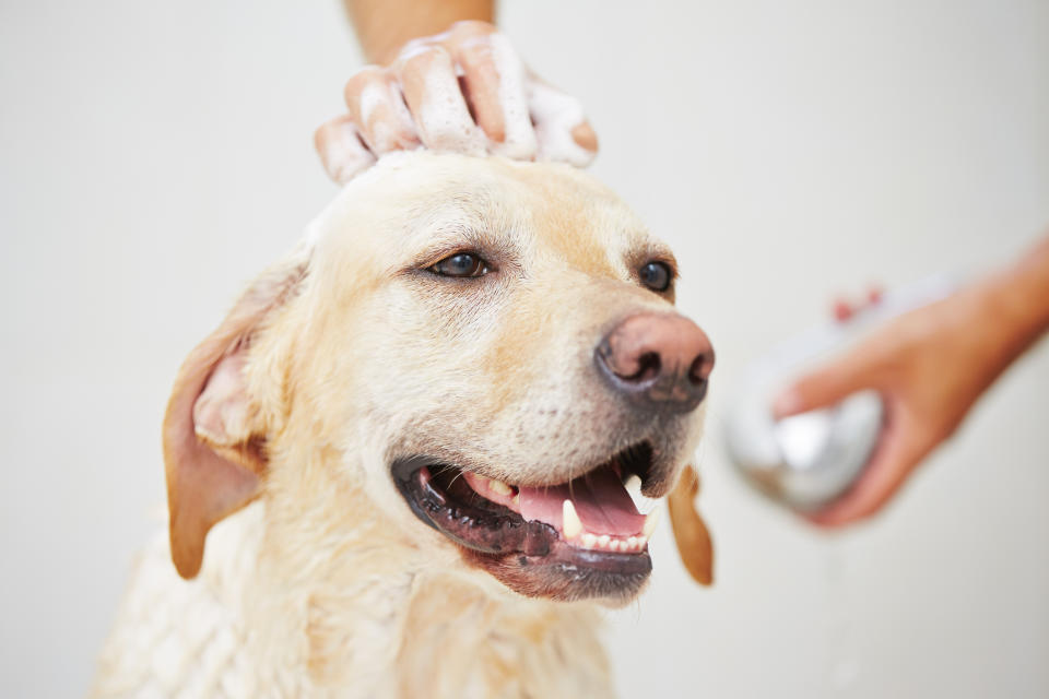 This Four in One Shampoo can help keep your pet looking and smelling clean. (Image via Getty Images)