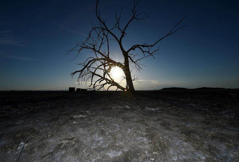 Californian farmers have dealt with a devastating four-year drought, with temperatures frequently exceeding 40 degrees Celsius (104 Fahrenheit) in the summer (AFP Photo/Mark Ralston)