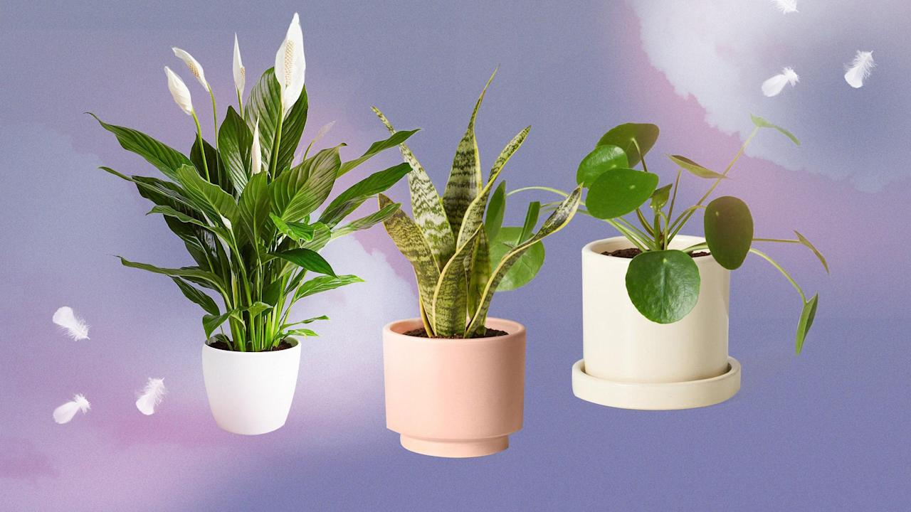 The Best Plants for Your Bedroom, According to Plantfluencers