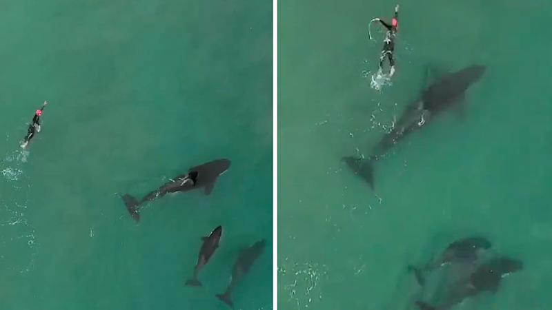 Stunning drone video captures swimmer's encounter with orca