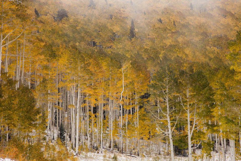"""<p>The La Sal Mountains rise above brilliant yellow fall foliage for an unforgettable view. The trees might even be dusted with powder from an early snowfall, like in this pretty photo. </p><p><a class=""""link rapid-noclick-resp"""" href=""""https://go.redirectingat.com?id=74968X1596630&url=https%3A%2F%2Fwww.tripadvisor.com%2FHotels-g60724-Moab_Utah-Hotels.html&sref=https%3A%2F%2Fwww.thepioneerwoman.com%2Fhome-lifestyle%2Fg36804013%2Fbest-places-to-see-fall-foliage%2F"""" rel=""""nofollow noopener"""" target=""""_blank"""" data-ylk=""""slk:FIND A HOTEL"""">FIND A HOTEL</a></p>"""