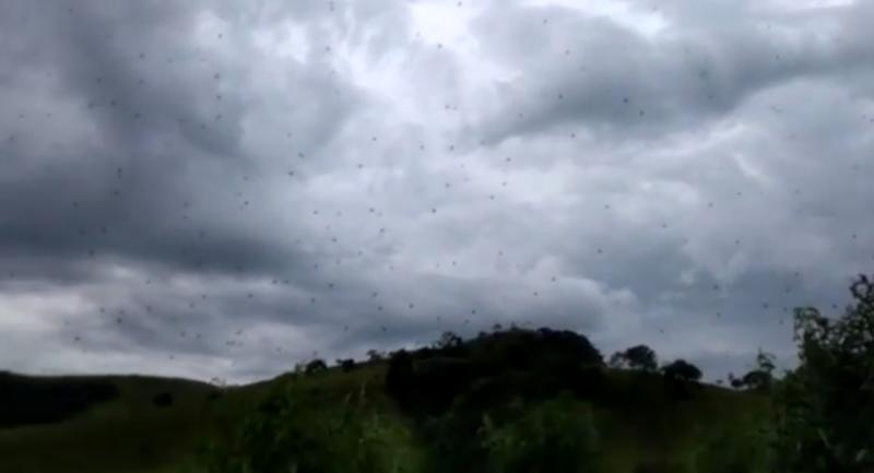 Viral Video Of Spiders 'Raining' From Sky Will Give You Nightmares