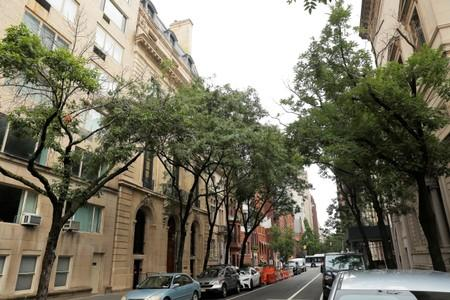 Trees grow in front of Jeffrey Epstein's home in the Manhattan borough of New York
