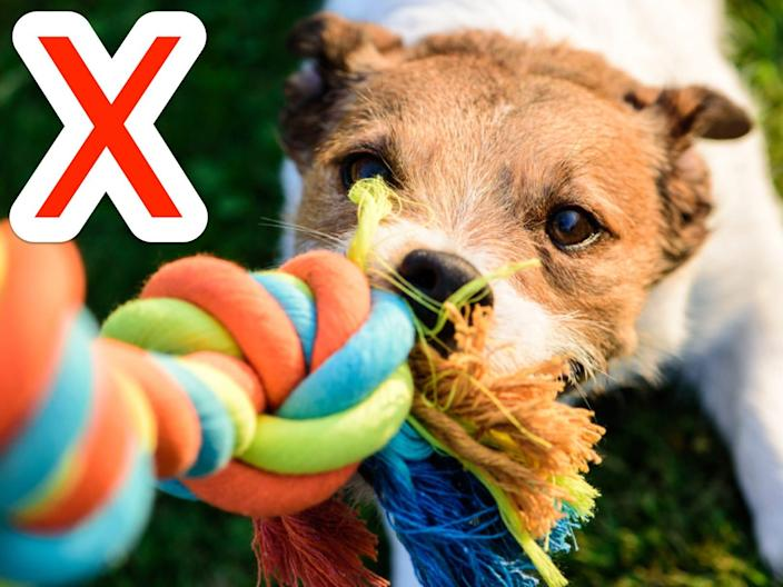 Some popular pet toys can actually be hazardous to certain animals.