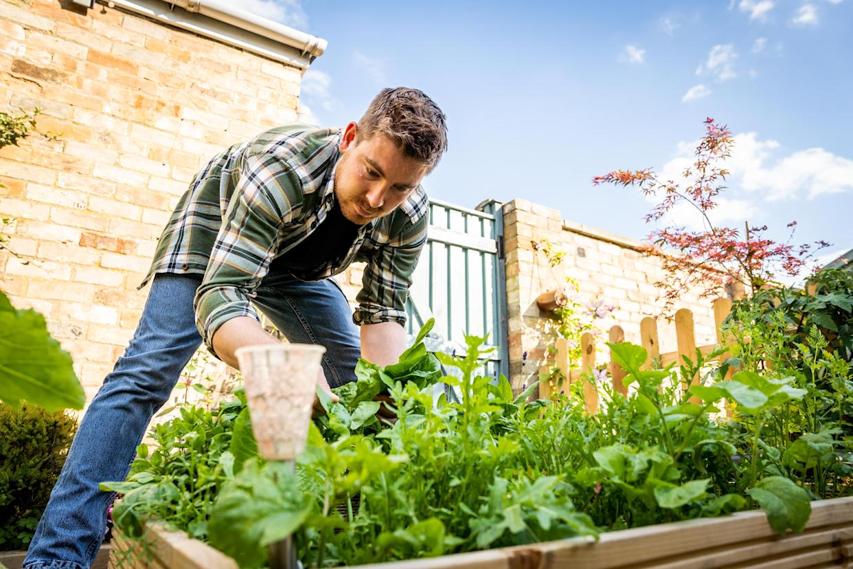 Kevin Thorne, 31, won the Grow your Own category in the prestigious B&Q Gardener of the Year competition - which gave green-fingered Brits the chance to show off their newfound skills