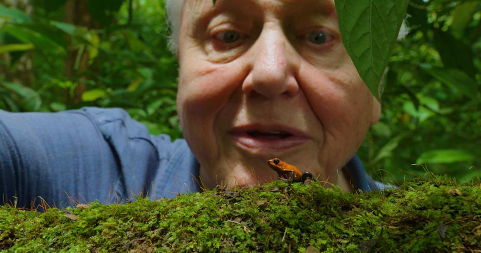 Attenborough's Life in Colour. (BBC/Humble BeeFilms/SeaLight Pictures)