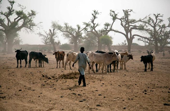A young boy from Beni Hussein tribe herds his cattle in El-Sereif, North Darfur, on May 13, 2013 (AFP Photo/Albert Gonzalez Farran)