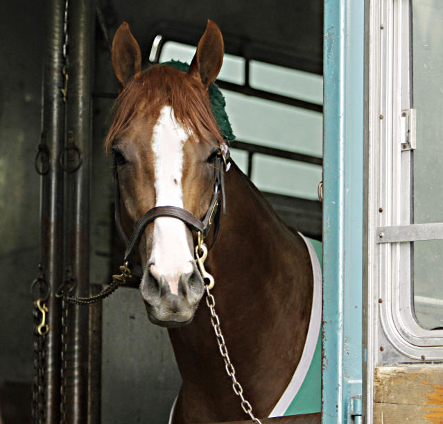 California Chrome is seen from a horse van after arriving at Churchill Downs for the Kentucky Derby in Louisville, Ky., Monday, April 28, 2014. California Chrome has won his last four races by a combined 24 ¼ lengths. (AP Photo/Garry Jones)