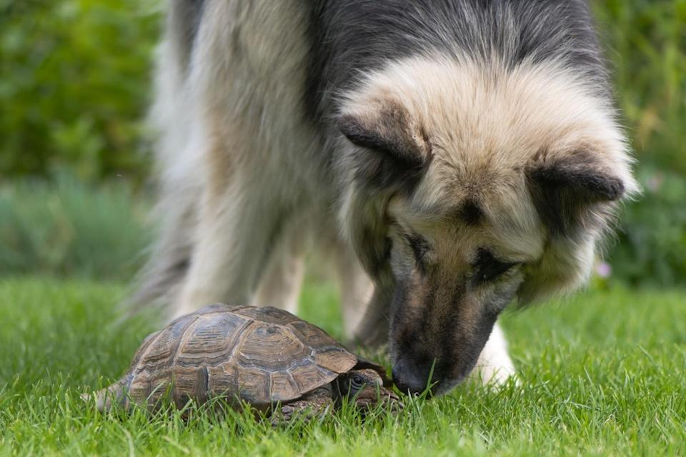 """This seems like quite the unlikely pair, but we're here for this <a href=""""https://bestlifeonline.com/animal-friendships/?utm_source=yahoo-news&utm_medium=feed&utm_campaign=yahoo-feed"""" rel=""""nofollow noopener"""" target=""""_blank"""" data-ylk=""""slk:animal friendship"""" class=""""link rapid-noclick-resp"""">animal friendship</a>."""