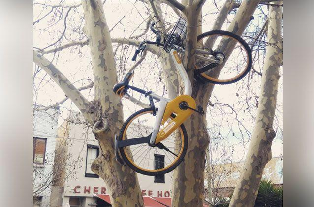 A bike was left up a tree in Kensington. Picture: Alex Smith/Facebook