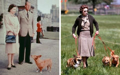 <span>Queen Elizabeth II and Prince Philip (left) with one of their corgis at Windsor Castle pictured in 1959 and Her Majesty walking her dogs in 1980 (right)</span> <span>Credit: PA/Getty </span>
