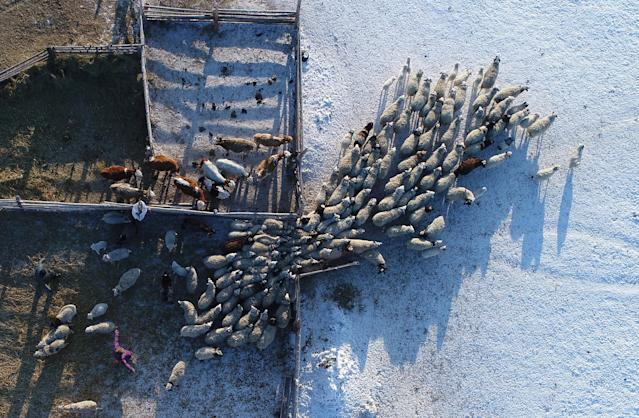 <p>An aerial view shows cattle at the nomad camp of farmer Tanzurun Darisyu in the Kara-Charyaa area south of Kyzyl town, the administrative center of the Republic of Tuva (Tyva region) — with temperatures at about minus 27 degrees Celsius (minus 16.6 degrees Fahrenheit) — in southern Siberia, Russia, on Feb. 14, 2018. (Photo: Ilya Naymushin/Reuters) </p>