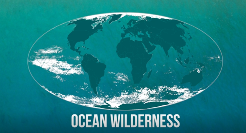The white areas are the 'wilderness' parts of the sea, relatively untouched by human pollution, fishing and shipping (Picture: Current Biology)