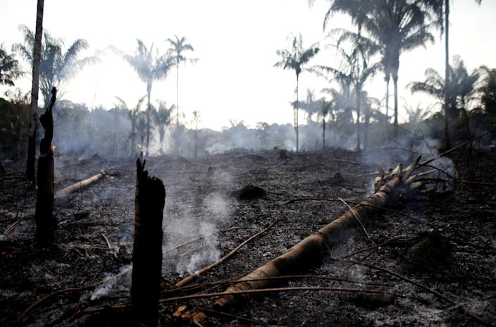A charred trunk on a tract of Amazon jungle that was recently burned by loggers and farmers in Iranduba, Amazonas state, Brazil, on Aug. 20. (Photo: Bruno Kelly/Reuters)