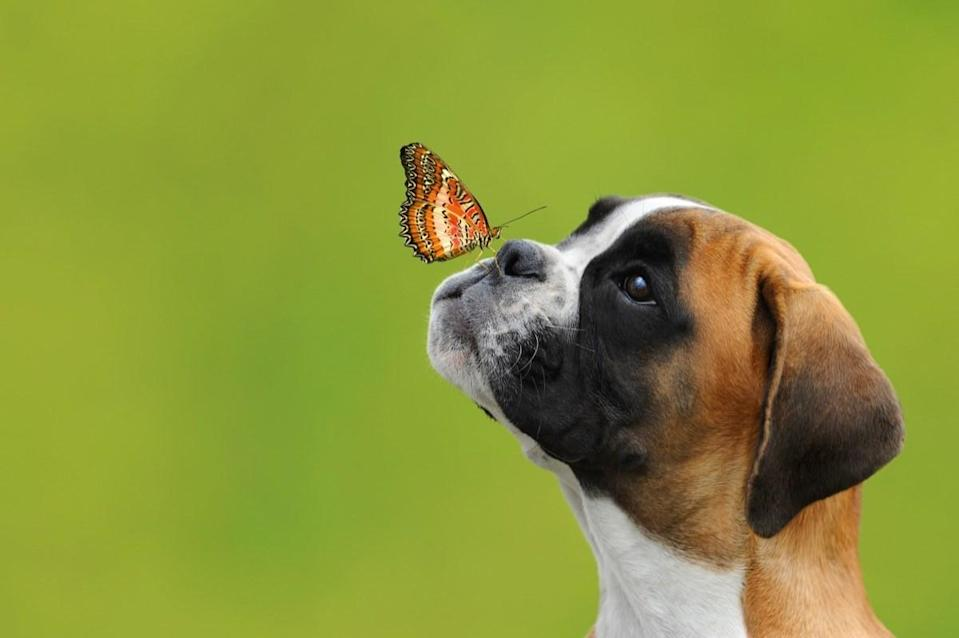 We should all start looking at our friends the way this pup looks at his butterfly buddy.