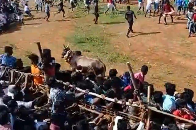 Stampeding bull climbs above barricade and charges into audience