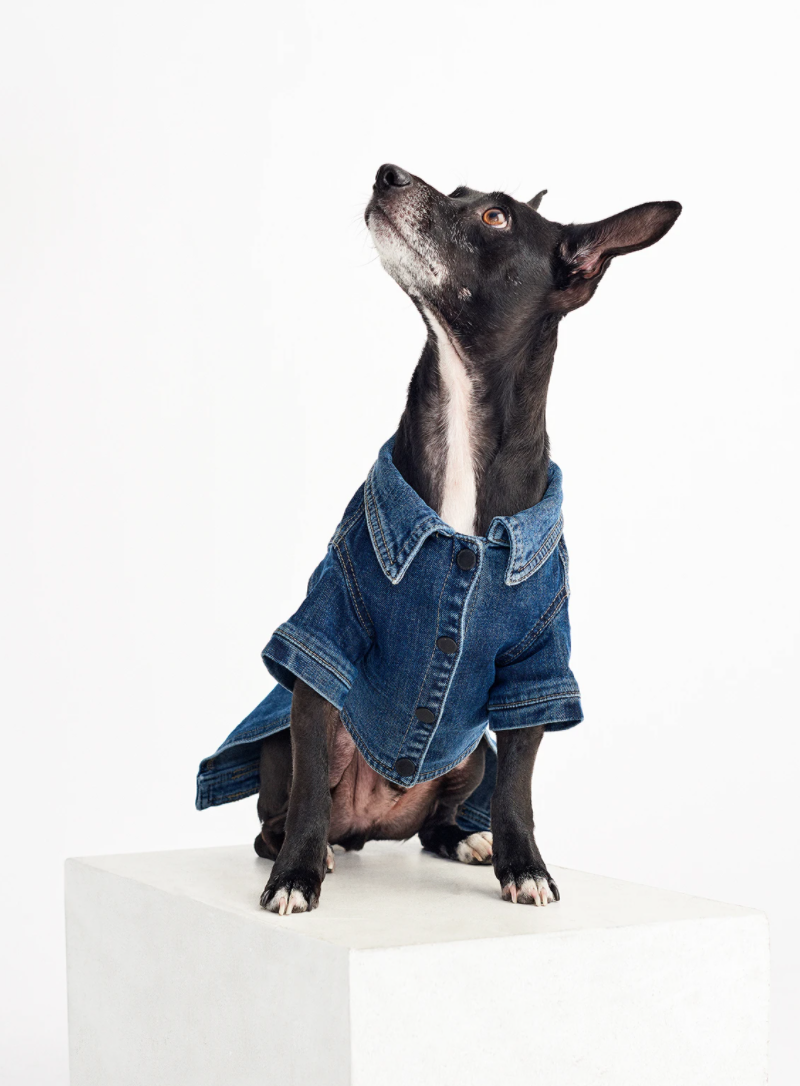 "<p>Spread smiles by dressing your dog in a fashionable jean shirt. </p> <p><strong>Buy it!</strong> Fido Jacket: Canine Trucker, $49.00; <a href=""https://www.dl1961.com/collections/pet-jackets/products/fido-canine-trucker-puppy-breath"" rel=""nofollow noopener"" target=""_blank"" data-ylk=""slk:DL1961.com"" class=""link rapid-noclick-resp"">DL1961.com</a></p>"