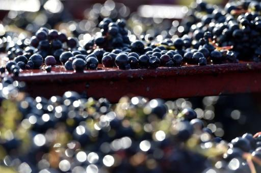 Weather causes 'lowest' European wine output since WWII