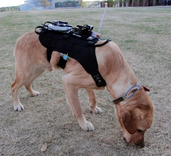 Canine 2.0: Dogs in High-Tech Gear Could Aid Search-and-Rescue Efforts