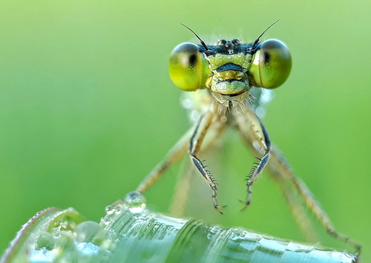 <p>Komang photographs insects using his Samsung Galaxy J7 and homemade camera lens in Bali, Indonesia. (Photo: Komang Wirnata/Caters News) </p>