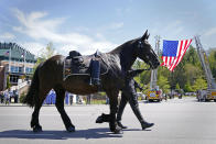 A riderless horse approaches the Holmes Convocational Center for the funeral services of Watauga County Sheriff's Deputies Sgt. Chris Ward and K-9 Deputy Logan Fox in Boone, N.C., Thursday, May 6, 2021. The two deputies were killed in the line of duty. (AP Photo/Gerry Broome)