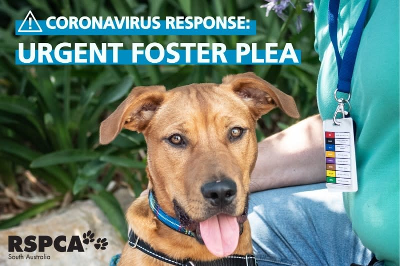 RSPCA SA is urging those who are thinking about adopting, to do so if they can. Source: RSPCA
