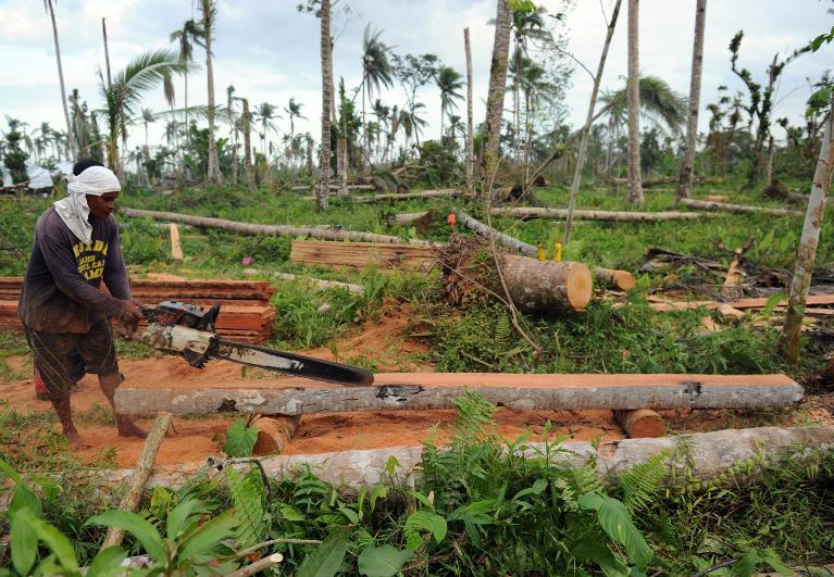 A worker uses a chainsaw to cut a coconut tree into a lumber at a village in the Typhoon Haiyan-stricken town of Jaro, Leyte province, central Philippines on February 17, 2014