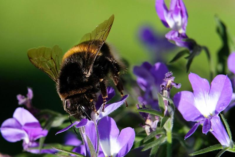 Michael Gove said new evidence indicated the risk to bees and other insects from the chemicals was