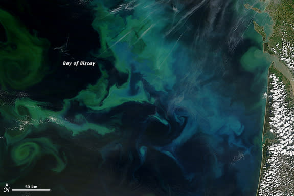 NASA's Terra satellite captured this natural-color image of phytoplankton blooms on May 4, 2013, in France's Bay of Biscay.