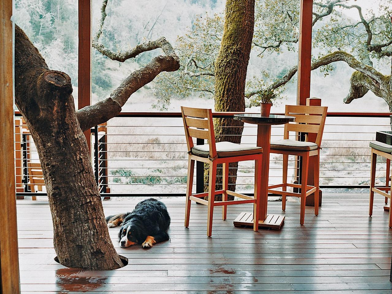 """<p>For $150 per stay, dogs of all sizes can appreciate the epicurean destination that is Napa Valley at the luxe, 157-acre <a href=""""https://www.cntraveler.com/hotels/united-states/calistoga/calistoga-ranch-napa-valley?mbid=synd_yahoo_rss"""">Calistoga Ranch</a>. Look forward to a welcome amenity filled with gourmet goodies and a canine culinary room service menu that includes braised short ribs over brown rice.  Blow up your Instagram stories with the popular """"Applewood-Smoked Bacon Scavenger Hunt"""" (designed by dog lovers), and explore the dog-friendly hiking trails through <a href=""""https://www.cntraveler.com/gallery/editors-picks-our-favorite-wine-country-hotels?mbid=synd_yahoo_rss"""">wine country's</a> surrounding woodlands.</p> <p><strong>Book Now</strong>: <a href=""""https://prf.hn/click/camref:1100l3xo8/pubref:CNT/destination:https://www.expedia.com/Calistoga-Hotels-Calistoga-Ranch.h920260.Hotel-Information"""" rel=""""nofollow"""">Expedia.com</a></p>"""
