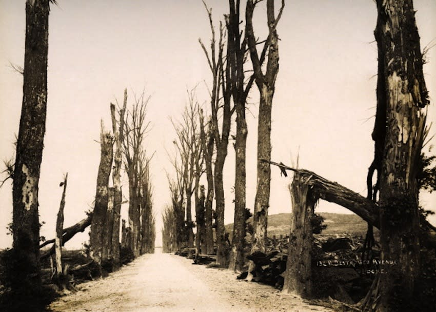 A tree-lined avenue at Locre in Belgium, photographed soon after the end of World War One, circa March 1919. This image is from a series documenting the damage and devastation that was caused to towns and villages along the Western Front in France and Belgium during the First World War. (Photo by Popperfoto/Getty Images)