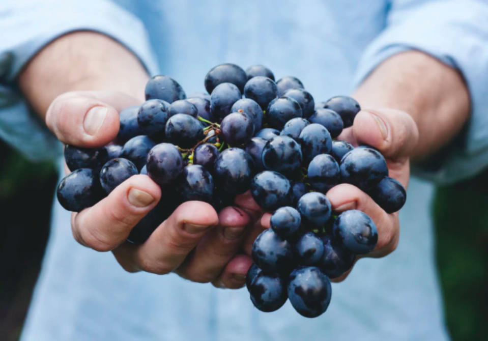 B.C. wineries implement sustainable solutions to lower carbon emissions