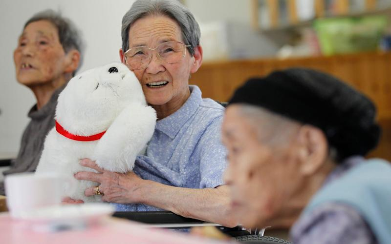 An elderly Japanese woman plays with a therapeutic robot seal