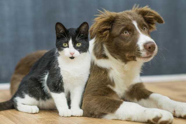 A puppy and a kitten sit closely to one another, patiently waiting for instruction.