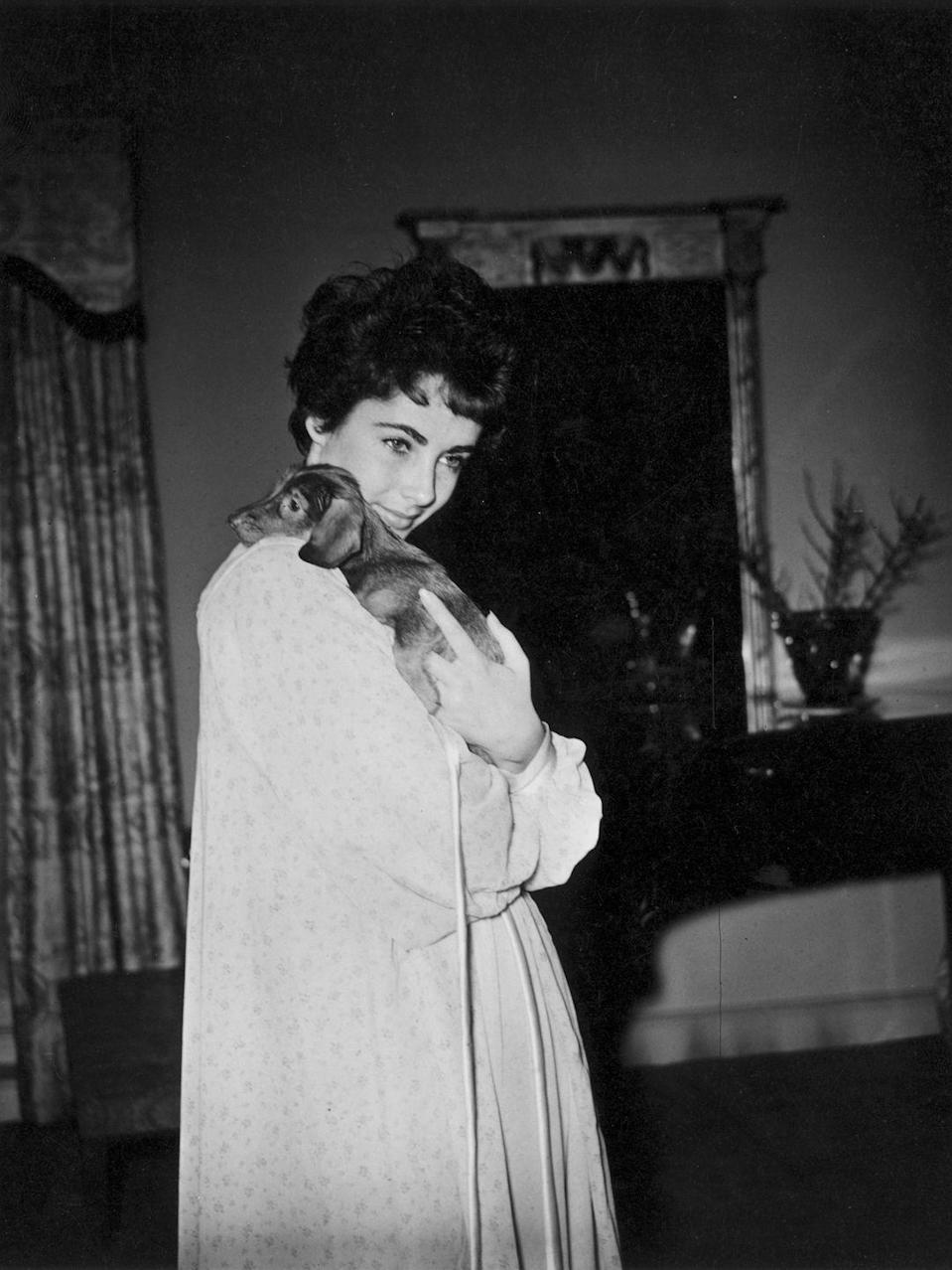 <p>The actress dotes on a dachshund puppy given to her by her new husband, Michael, as a present for her return to Los Angeles. </p>