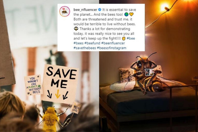 'B' Has Become an Instagram Influencer and Is Trying to Save the Bee Community