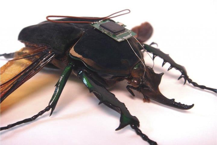 seven amazing darpa projects himems robotic insects