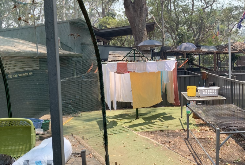 Washing drying on a rotary clothes line at the koala hospital.