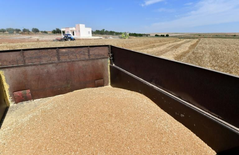 The UN's Food and Agriculture Organization estimates that over the past century, around three quarters of the diversity in world crops has disappeared (AFP/FETHI BELAID)