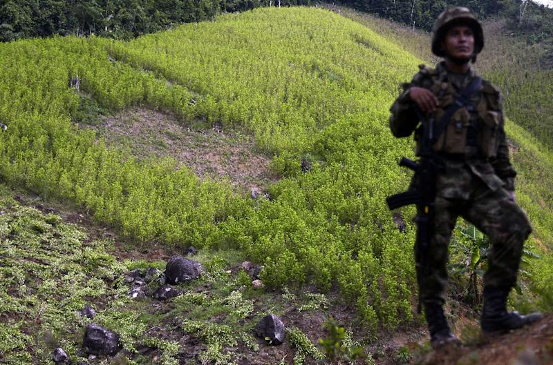 A Colombian soldier provides security to a group of peasants working in the eradication of coca plantations in the mountains of Yali municipality, northeast of Medellin, Antioquia department, on September 3, 2014 (AFP Photo/Raul Arboleda)