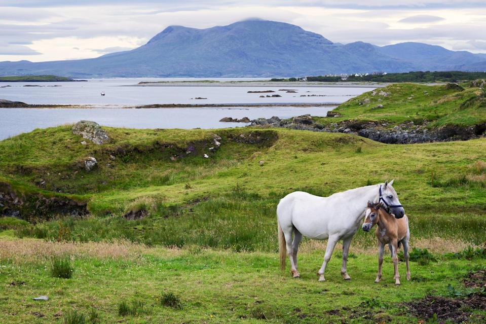 """<p>Connemara is a breathtaking and rugged costal landscape on the west coast of Ireland. You could spend hours just driving around marveling at the beautiful Irish countryside here and it would definitely rank as one of the top travel days of your life. To explore Connemara, you can either drive or get <a href=""""https://lallytours.com/tours/tours-from-galway/galway-to-connemara-and-kylemore-abbey/"""" class=""""link rapid-noclick-resp"""" rel=""""nofollow noopener"""" target=""""_blank"""" data-ylk=""""slk:a day bus tour from Galway"""">a day bus tour from Galway</a>, which is what I actually recommend. The bus tours take you to all the best places and must-see sites, including the town of Cong (where <strong>The Quiet Man</strong> was filmed), spots where parts of <strong>Marley &amp; Me</strong> were filmed, Kylemore Abbey, Killary Fjord, the town of Spiddal, and more. And since Connemara is still so full of traditional Irish culture, you'll wander through many Gaeltacht areas, which are areas where the Irish language is still prodominantly spoken.</p>"""