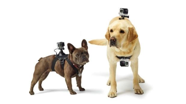 How to Shoot a GoPro Video With Your Dog