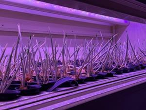 Saffron Tech Automated Growing Containers