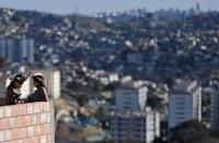 Wearing face masks and head-dresses, members of the Pataxo Ha-ha-hae tribe look out over the concrete jungle of the Vila Vitoria favela near Belo Horizonte, Brazil