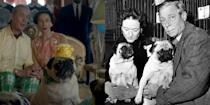 """<p>Between the many pug pillows and the pugs themselves, <em>The Crown</em> has been diligent in its portrayal of one particularly cuddly aspect of the Duke and Duchess of Windsor's life of luxury. Over the years, the couple's grumble of pugs included Disraeli, Davey Crockett, Black Diamond, Imp, Ginseng, and arguably the cutest one of them all, Trooper, whose birthday is featured in """"Vergangenheit"""" (season 2, episode 6). [Editor's note: A group of pugs is called a """"grumble."""" Cutely ironic, eh?] The episode technically focuses on the Duke of Windsor allegedly being a Nazi sympathizer, but we did promise to show you every main character, so...</p>"""
