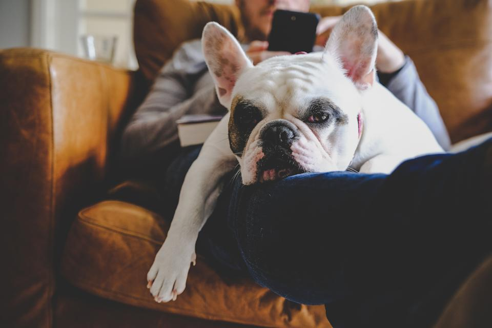 Experts advise couples get a pet-nup when buying a pooch together. (Getty Images)