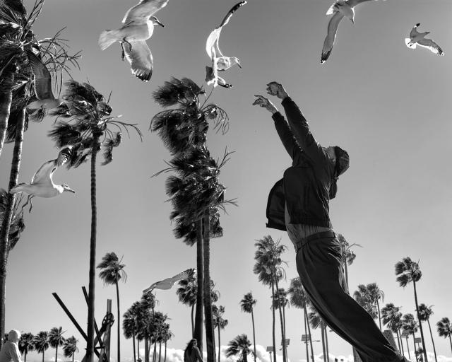 <p>On the windiest day I ever witnessed in Venice Beach, a homeless man waits for an evening bus to take him to a downtown shelter. He kills time by feeding seagulls from a bag of chips, amused by the fact that the birds can barely move due to the violent winds. Suddenly the man realizes that one of the seagulls is within reach and jumps to catch the struggling bird. He misses, but for a split second, looks like he is about to take flight himself. (© Dotan Saguy) </p>