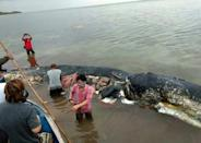 A dead sperm whale that washed ashore had nearly six kilograms (13.2 lbs) of plastic waste in its stomach, in Wakatobi National Park in Indonesia in 2018