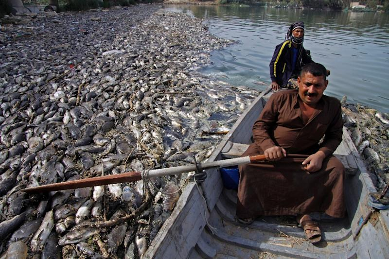 Rumours swirled over whether the fish used to prepare Iraq's signature dish masgoof were sick or the Euphrates River had been poisoned (AFP Photo/Haidar HAMDANI)