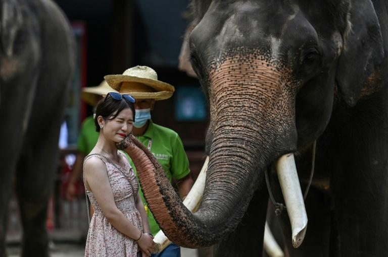 Weighing up to four tons, elephants consume as much as 200 kilogrammes (440 pounds) of food daily
